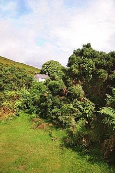 Jenny Rainbow - Lost in Ferns. Wicklow Mountains