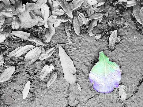 Sharon Williams Eng - Lost Petal Selective Color