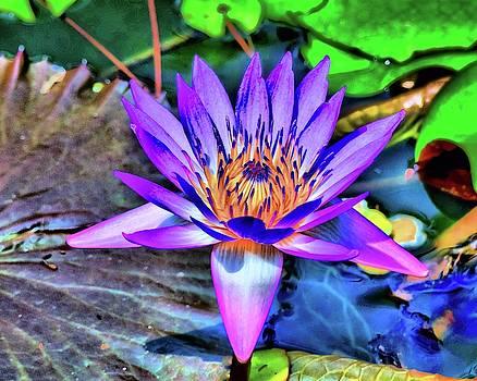 Lotus blossom of life by Karl-Heinz Luepke