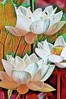 Lotus flower macro  by Geraldine Scull