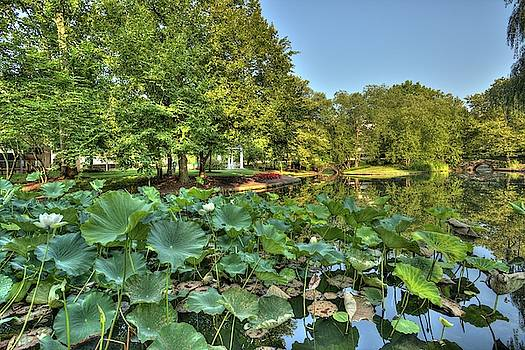 Lotus pond in Princeton New Jerseyq by Geraldine Scull