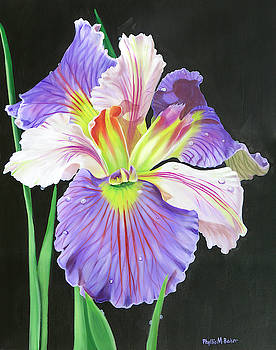 Louisiana Iris by Phyllis Beiser