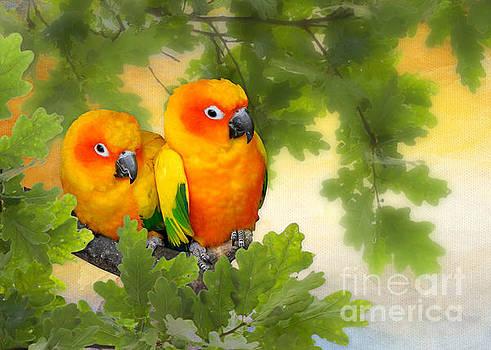 Love Birds by Morag Bates