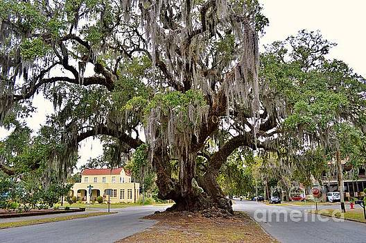 Lover's Oak by Linda Covino