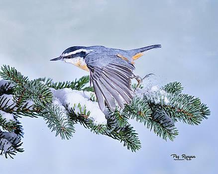 Low Flight by Peg Runyan
