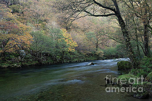 Low Hows Wood and the River Derwent by Gavin Dronfield