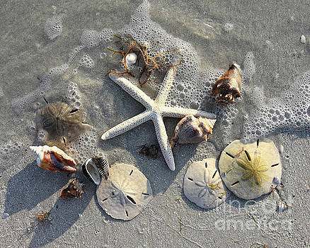 Low Tide Treasures by Catherine Sherman
