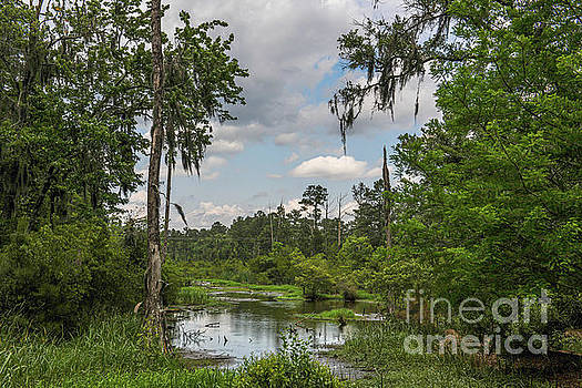 Lowcountry Playground - Popular Grove by Dale Powell