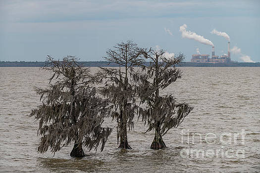 Lowcountry Winter - Lake Moultrie by Dale Powell