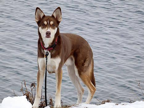 Loyal Dog Awaiting His Master Fisherman by Gerald Salamone