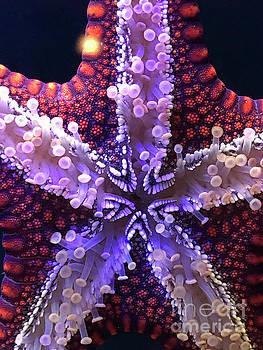 Lucky Starfish by Karen Adams