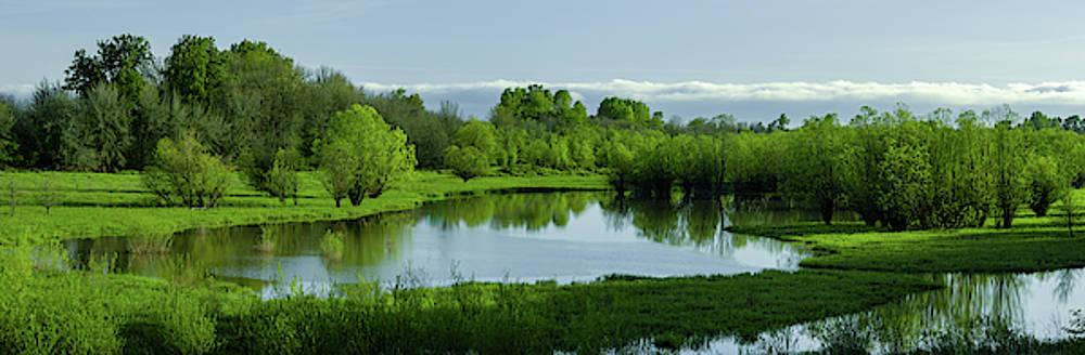 Lush Spring Wetland by Don Schwartz