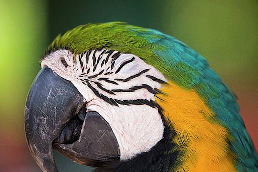 Macaw Details by Stephanie McDowell