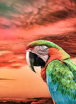 Macaw Parrot by Rosalie Scanlon