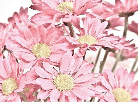 Macro Spring Daisies by Marsha Heiken