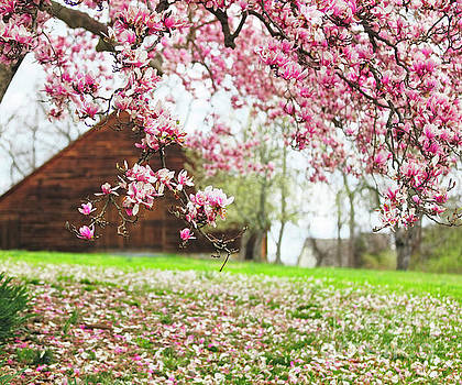 Magnolia Bloom on a Farm by George Oze