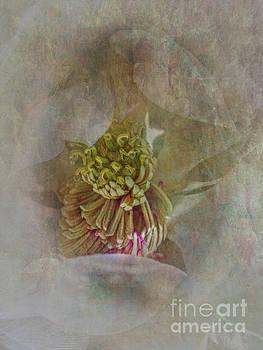 Magnolia by Judy Hall-Folde