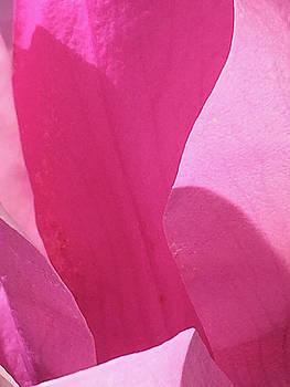 Magnolia_0350_14 by Tari Kerss