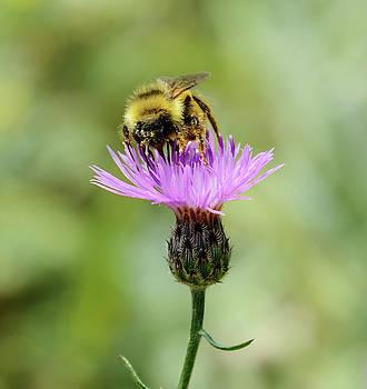 Whispering Peaks Photography - Making Honey