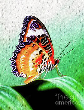 Malay Lacewing Butterfly II by Kenneth Montgomery