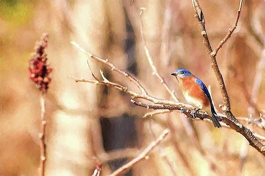 Male Eastern Bluebird Painting by Carol Montoya