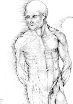 Male Front Study by Drew