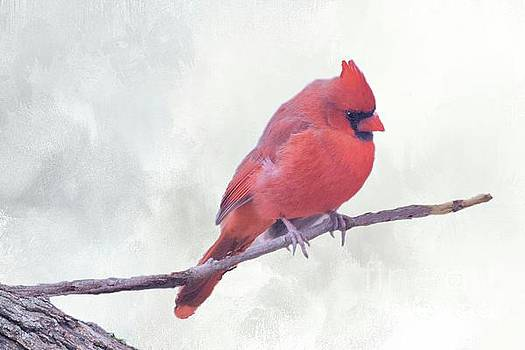 Male Northern Cardinal  by Janette Boyd
