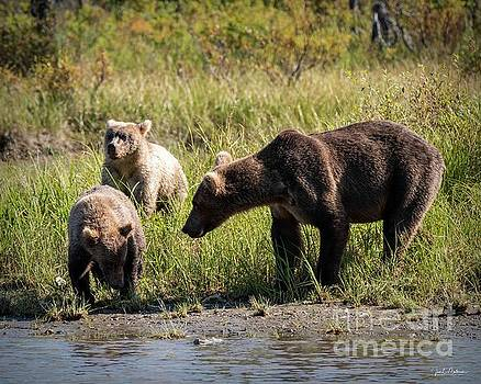 Mama and her Cubs - Bears by Jan Mulherin