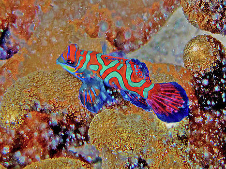 Susan Burger - Mandarin Fish