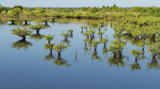 Paul Rebmann - Mangrove Nursery