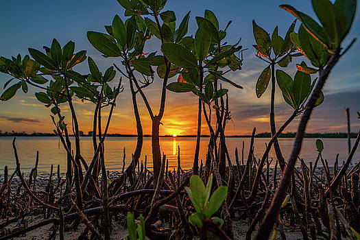 Mangrove Sunset by Joey Waves