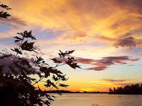 Maple Sunset Clouds by Susan Janus