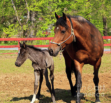 Mare Horse and Colt by Jill Lang