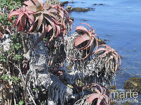 Marine Gardens Aloe by Marte Thompson