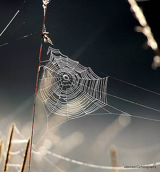 Marsh Spider's Web by Jonathan Jackson Coe