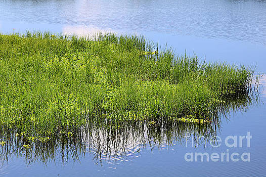 Diann Fisher - Marsh Water Art