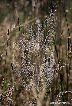 Marsh Web by Jonathan Jackson Coe
