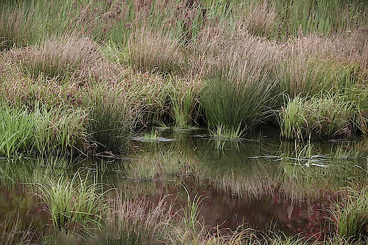 Marshland by Lisa Bell