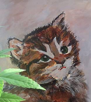 Cascade Kitty by Dominique Derenne