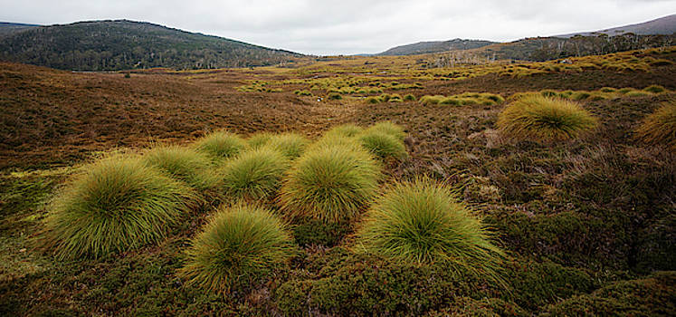 Maryland Track in Cradle Mountain. by Rob D