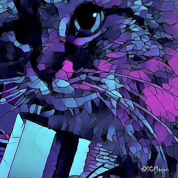 Mattie Cat by Steven Macon