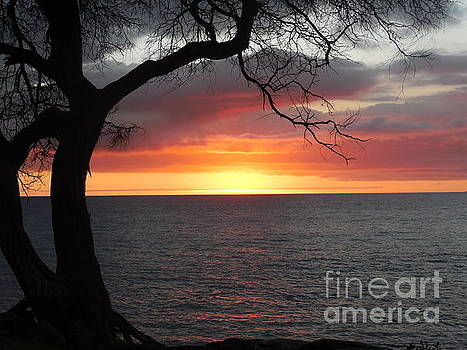 Maui Sunset by Lisa Venable