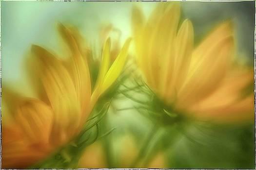 Natural Abstract Photography - Maximiliani