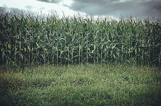 Maze Field by Steve Stanger