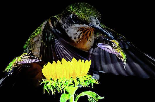 Mean Hummingbird by John Wilkinson