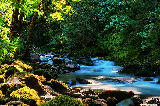 Meditative Light Along Water's Edge by Dee Browning