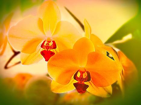 Mellow Yellow Orchids by Christina Ford