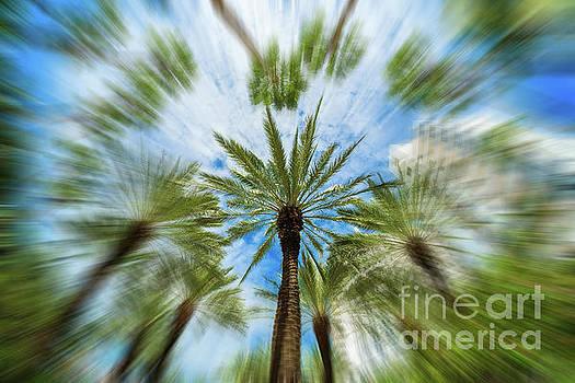 Miami Beach Palm Tree Blur by Raul Rodriguez