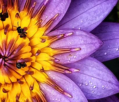 Microview Of Water Lily by AE collections