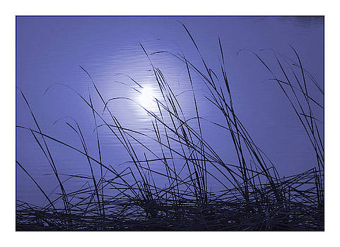 Midnight moonlight reflected on a reed rimmed lake by Steve Clarke
